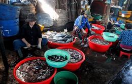Nhọc nhằn nghề hấp cá tại Quy Nhơn