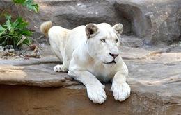 Không có động vật quý hiếm bị chết ở Vinpearl Safari Phú Quốc