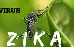 Brazil sẽ phát miễn phí thuốc chống virus Zika