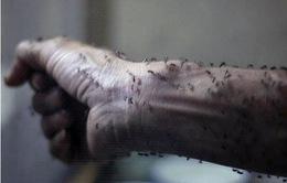 Nỗi lo virus Zika bùng phát tại nhiều khu vực