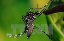 Phòng Zika, Bộ Y tế tổ chức chiến dịch diệt muỗi, loăng quăng lần 2