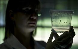 Phát hiện đáng sợ mới của virus Zika lên thai nhi