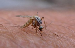 Virus Zika lây lan đáng sợ, có thể 4 triệu người nhiễm ở hơn 30 quốc gia