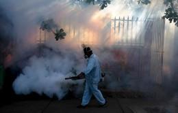 Tổng thống Brazil kêu gọi cộng đồng chống virus Zika