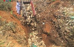 Thanh Hóa: Phát hiện 1 phụ nữ lái xe tải chở vịt chết đi bán