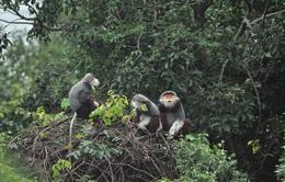 Đình chỉ công tác 5 kiểm lâm liên quan đến vụ phá rừng Sơn Trà