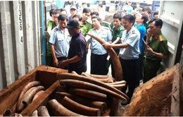 Xem xét khởi tố vụ vận chuyển trái phép 2 tấn ngà voi