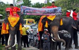 Thái Lan: Đưa voi đi phát tờ rơi trưng cầu ý dân