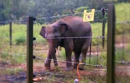 Đăk Lăk: Bảo vệ voi bằng hàng rào điện
