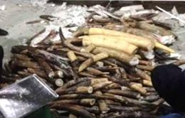 Phát hiện ngà voi giấu tinh vi trong ruột khối gỗ