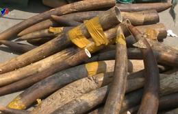 Buôn bán động, thực vật hoang dã tại Việt Nam ngày càng tinh vi