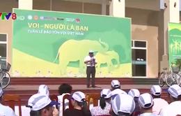 Khai mạc Tuần lễ bảo tồn voi Việt Nam