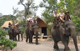 Tổ chức Động vật châu Á (AAF) giúp bảo tồn voi tại Đăk Lăk