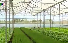 Khó khăn về vốn triển khai nông nghiệp công nghệ cao