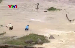 Người dân Kon Tum liều mình vớt gỗ trong mùa mưa lũ