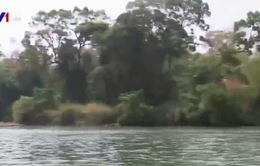 Phá rừng vườn quốc gia làm thủy điện: Chuyện thật như đùa!