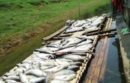 Phạt gần nửa tỷ đồng công ty xả thải ra sông Bưởi khiến cá chết hàng loạt