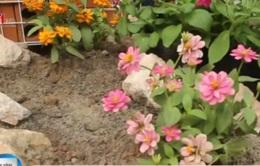 """""""Hô biến"""" bãi rác thành… vườn hoa"""