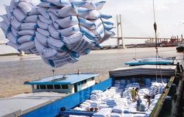 Tháo gỡ khó khăn cho doanh nghiệp xuất khẩu lúa gạo (15h35, ngày 29/10, VTV1)