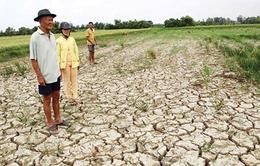 Di chứng hạn mặn ở đồng bằng sông Cửu Long (17h20, VTV1)