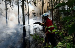 Cháy rừng nghiêm trọng tại đảo Madeira, Bồ Đào Nha