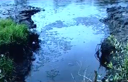 Phạt 332 triệu đồng doanh nghiệp gây ô nhiễm ở Cà Mau