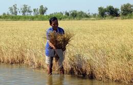 Sản xuất lương thực phải thay đổi do biến đổi khí hậu