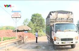 Lạng Sơn vắng bóng xe chở lợn xuất sang Trung Quốc