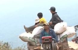 """Xe chở nông sản vi phạm giao thông """"rầm rộ"""" ở Lâm Đồng"""