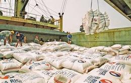 Kim ngạch xuất khẩu gạo giảm, Việt Nam sẽ mất vị trí thứ 2?