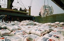 Xuất khẩu gạo ở mức thấp nhất trong 8 năm qua