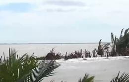 Tiền Giang: Hàng ngàn hecta nuôi trồng thủy sản đứng trước nguy cơ xóa sổ