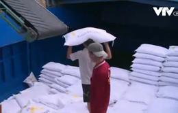 Thái Lan bán lượng gạo lớn kỷ lục, gạo Việt Nam trước nguy cơ hạ giá