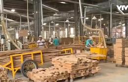 Rủi ro xuất khẩu gỗ thông qua công ty thương mại trung gian