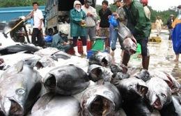 Xuất khẩu cá ngừ sang Nhật Bản liên tục giảm