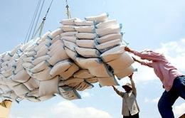 Xuất khẩu gạo Việt Nam giảm kỷ lục trong gần 10 năm qua