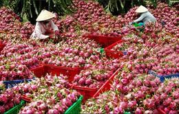 Trái cây Việt Nam đáp ứng tiêu chuẩn của nhiều thị trường lớn