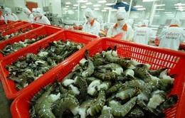 Tôm Việt Nam xuất khẩu chiếm 45% sản lượng tôm toàn cầu