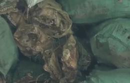 Bắt vụ buôn 6 tấn xương động vật bốc mùi hôi thối tại Nghệ An