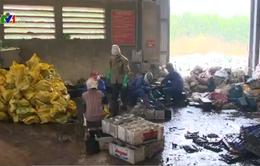 Xử lý tình trạng nhiễm độc chì tại xã Chỉ Đạo (Hưng Yên)