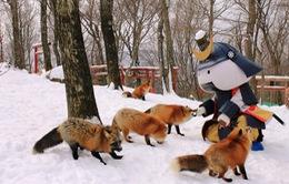 Khám phá ngôi làng của những chú cáo tại Miyagi, Nhật Bản