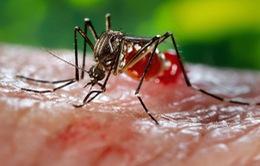 Đà Nẵng chủ động ngăn ngừa dịch Zika trước thềm ABG 2016