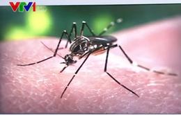 Brazil phát hiện chứng rối loạn não ở người lớn liên quan đến virus Zika
