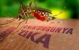 Indonesia lo ngại virus Zika lây lan
