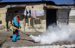 Nỗi ám ảnh virus Zika lan rộng trên quy mô toàn cầu