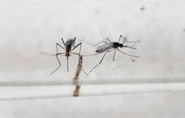 Phú Yên: Dịch bệnh do virus Zika đã chấm dứt