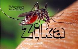 Kêu gọi hội nghị khu vực Mỹ La tinh nhằm đối phó virus Zika
