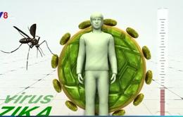 Virus Zika ở Brazil tương đồng với virus Zika ở châu Á