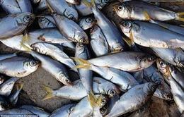 Những vụ cá chết hàng loạt trên thế giới