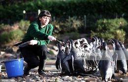 """Choáng với thu nhập """"khủng"""" của nhân viên sở thú tại Mỹ: Gần 1 tỷ đồng/năm"""